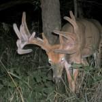 Nice Buck That Scored Over 220