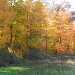 Beautiful Fall Colors At Tomorrow River Ranch