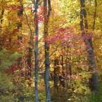 Fall Colors At The Ranch