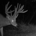 Nice Buck With Unusual Eye Guards
