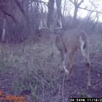 Nice Young Buck